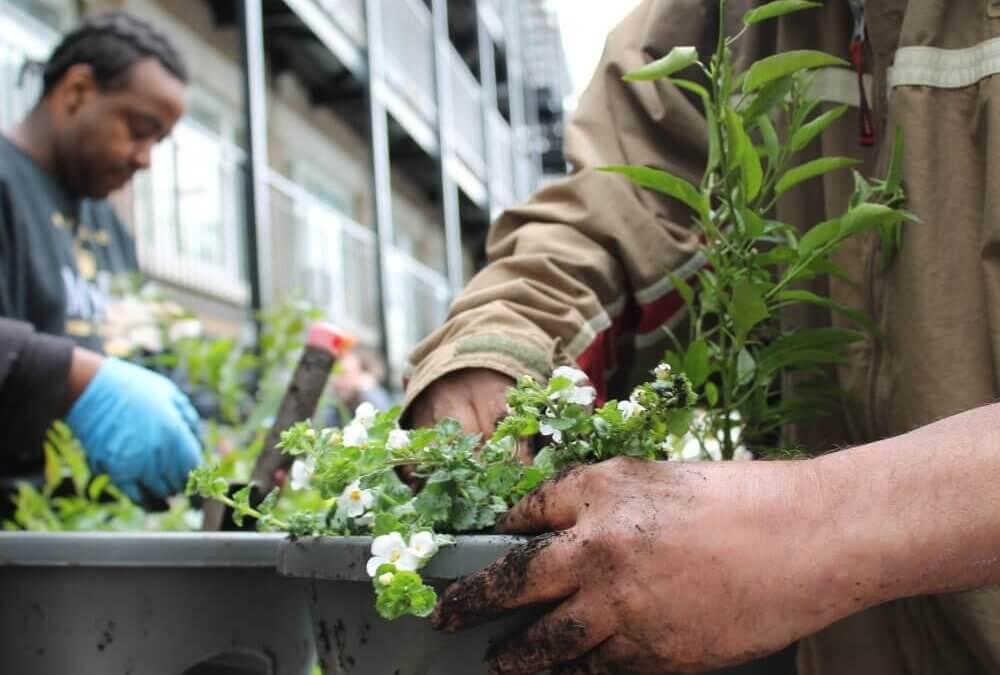 Journée fleurs aux appartements Papineau